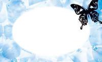ブラックバタフライ・ブルー(写真あり) 裏面