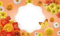 花いっぱい・オレンジ(写真あり) 裏面