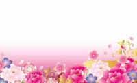 華やか牡丹・ピンク 裏面